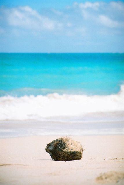 同じオアフ島でも場所が違えば海の色が全く違いますよね。ココはまるで絵の具を落としたように鮮やかなコバルトブルー。