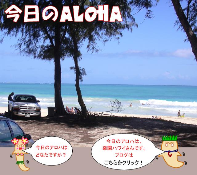 楽園HAWAII 今日のアロハ