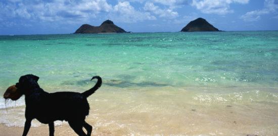 行ってみたい!ハワイオアフ島のとっておきのビーチランキング